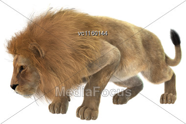 3D Digital Render Of A Male Lion Hunting Isolated On White Background Stock Photo
