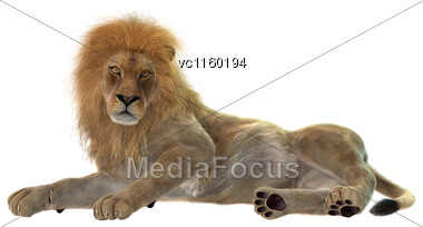 3D Digital Render Of A Male Lion Resting Isolated On White Background Stock Photo