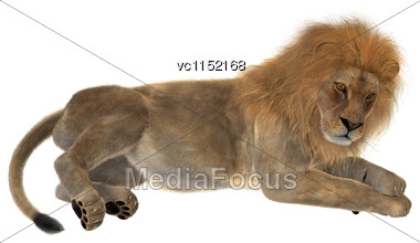 3D Digital Render Of A Male Lion Isolated On White Background Stock Photo