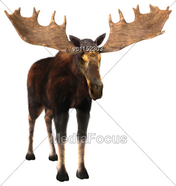 3D Digital Render Of A Male Moose Isolated On White Background Stock Photo