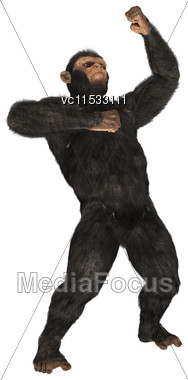 3D Digital Render Of A Monkey Chimpanzee Isolated On White Background Stock Photo