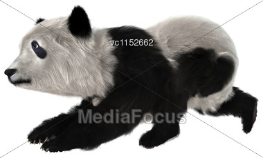 3D Digital Render Of A Panda Bear Cub Isolated On White Background Stock Photo