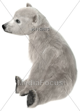 3D Digital Render Of A Polar Bear Cub Sitting Isolated On White Background Stock Photo