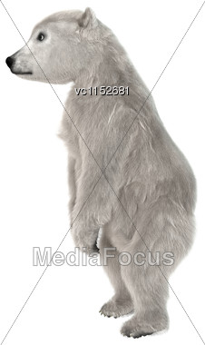 3D Digital Render Of A Polar Bear Cub Standing Isolated On White Background Stock Photo