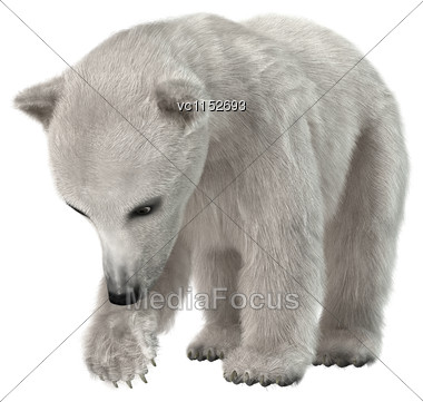 3D Digital Render Of A Polar Bear Cub Isolated On White Background Stock Photo
