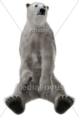 3D Digital Render Of A Polar Bear Sitting Isolated On White Background Stock Photo