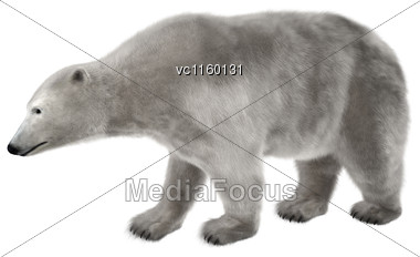 3D Digital Render Of A Polar Bear Walking Isolated On White Background Stock Photo