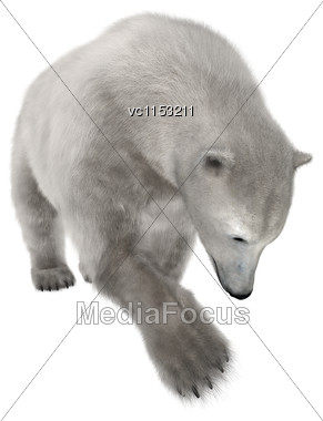 3D Digital Render Of A Polar Bear Isolated On White Background Stock Photo