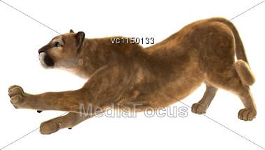 3D Digital Render Of A Puma, Also Known As A Cougar, Mountain Lion, Or Catamount, Isolated On White Background Stock Photo