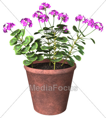 3D Digital Render Of A Purple Geranium Pot Isolated On White Background Stock Photo