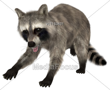 3D Digital Render Of A Raccoon Isolated On White Background Stock Photo