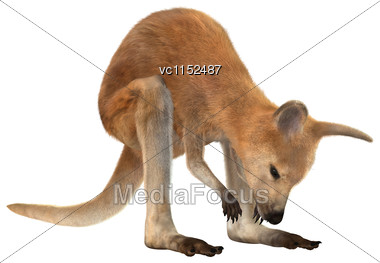3D Digital Render Of A Red Baby Kangaroo Isolated On White Background Stock Photo
