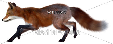 3D Digital Render Of A Red Fox Running Isolated On White Background Stock Photo