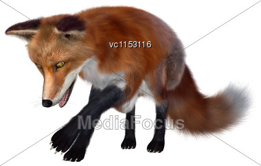 3D Digital Render Of A Red Fox Isolated On White Background Stock Photo