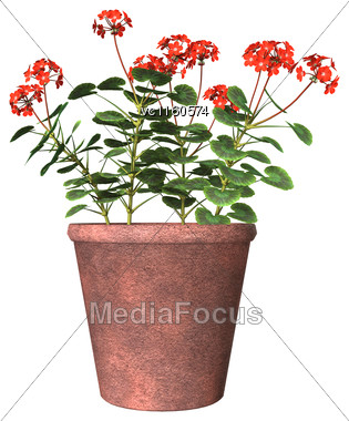 3D Digital Render Of A Red Geranium Pot Isolated On White Background Stock Photo