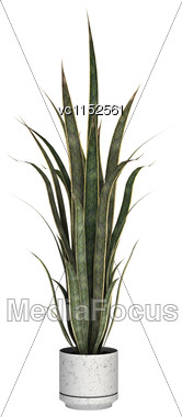 3D Digital Render Of A Sansevieria In A Flower Pot Isolated On White Background Stock Photo