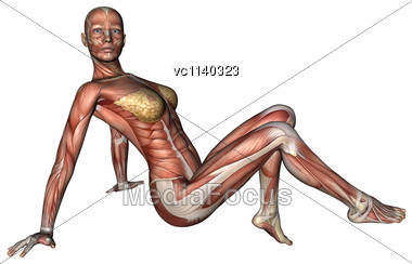 3D Digital Render Of A Sitting Female Anatomy Figure With Muscles Map Isolated On White Background Stock Photo