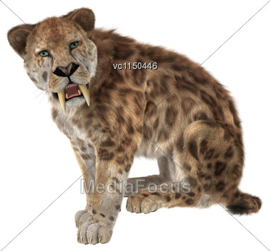 3D Digital Render Of A Sitting Smilodon Or A Saber Toothed Cat Isolated On White Background Stock Photo