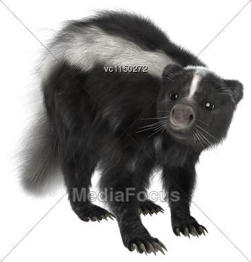 3D Digital Render Of A Skunk Isolated On White Background Stock Photo