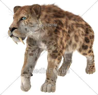 3D Digital Render Of A Smilodon Or A Saber Toothed Cat Isolated On White Background Stock Photo