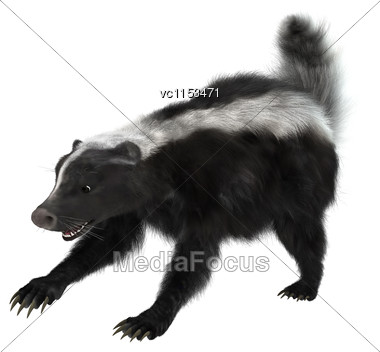 3D Digital Render Of A Striped Skunk Or Mephitis Mephitis Isolated On White Background Stock Photo