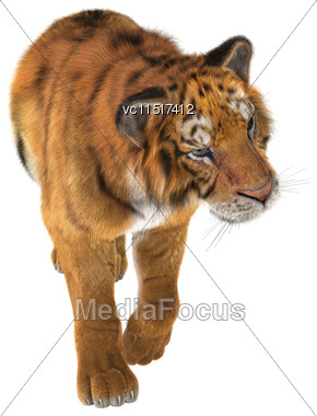 3D Digital Render Of A Tiger Walking Isolated On White Background Stock Photo