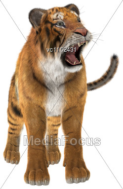 3D Digital Render Of A Tiger Isolated On White Background Stock Photo