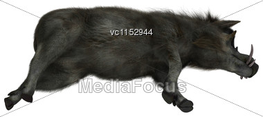 3D Digital Render Of A Warthog Resting Isolated On White Background Stock Photo