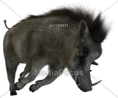 3D Digital Render Of A Warthog Isolated On White Background Stock Photo