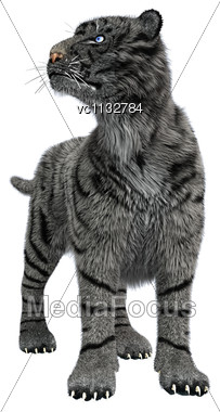 3D Digital Render Of A White Tiger With Blue Eyes Isolated On White Background Stock Photo