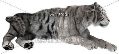 3D Digital Render Of A White Tiger Resting Isolated On White Background Stock Photo