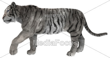 3D Digital Render Of A White Tiger Walking Isolated On White Background Stock Photo