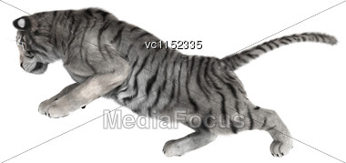 3D Digital Render Of A White Tiger Isolated On White Background Stock Photo