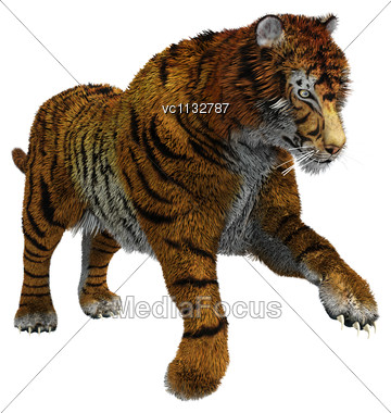 3D Digital Render Of A Wild Tiger Isolated On White Background Stock Photo