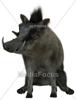 3D Digital Render Of A Wild Warthog Sitting Isolated On White Background Stock Photo