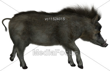 3D Digital Render Of A Wild Warthog Walking Isolated On White Background Stock Photo