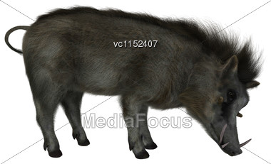 3D Digital Render Of A Wild Warthog Isolated On White Background Stock Photo