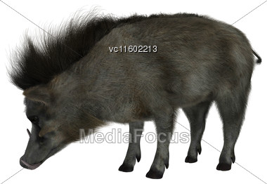 3D Digital Render Of A Wild Wartrog Isolated On White Background Stock Photo