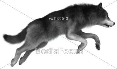 3D Digital Render Of A Wild Wolf Jumping Isolated On White Background Stock Photo
