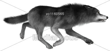 3D Digital Render Of A Wild Wolf Running Isolated On White Background Stock Photo