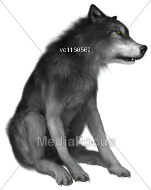 3D Digital Render Of A Wild Wolf Sitting Isolated On White Background Stock Photo