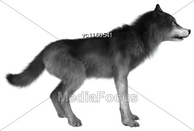 3D Digital Render Of A Wild Wolf Isolated On White Background Stock Photo