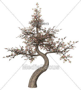 3D Illustration Of A Blowing Cherry Tree Isolated On White Background Stock Photo