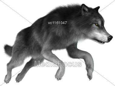 3D Illustration Of A Gray Wolf Jumping Isolated On White Background Stock Photo