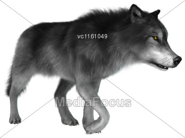 3D Illustration Of A Gray Wolf Walking Isolated On White Background Stock Photo