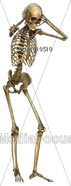 3D Illustration Of A Human Skeleton Isolated On White Background Stock Photo