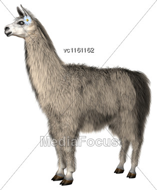 3D Illustration Of A Lama Isolated On White Background Stock Photo
