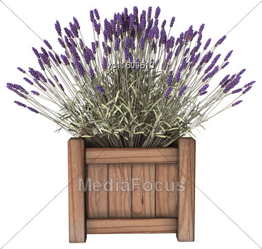 3D Illustration Of A Lavender Planter Isolated On White Background Stock Photo