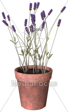 3D Illustration Of A Lavender Pot Isolated On White Background Stock Photo