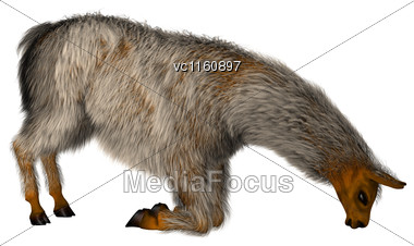 3D Illustration Of A Llama Or Lama Glama, A Domesticated South American Camelid, Isolated On White Background Stock Photo